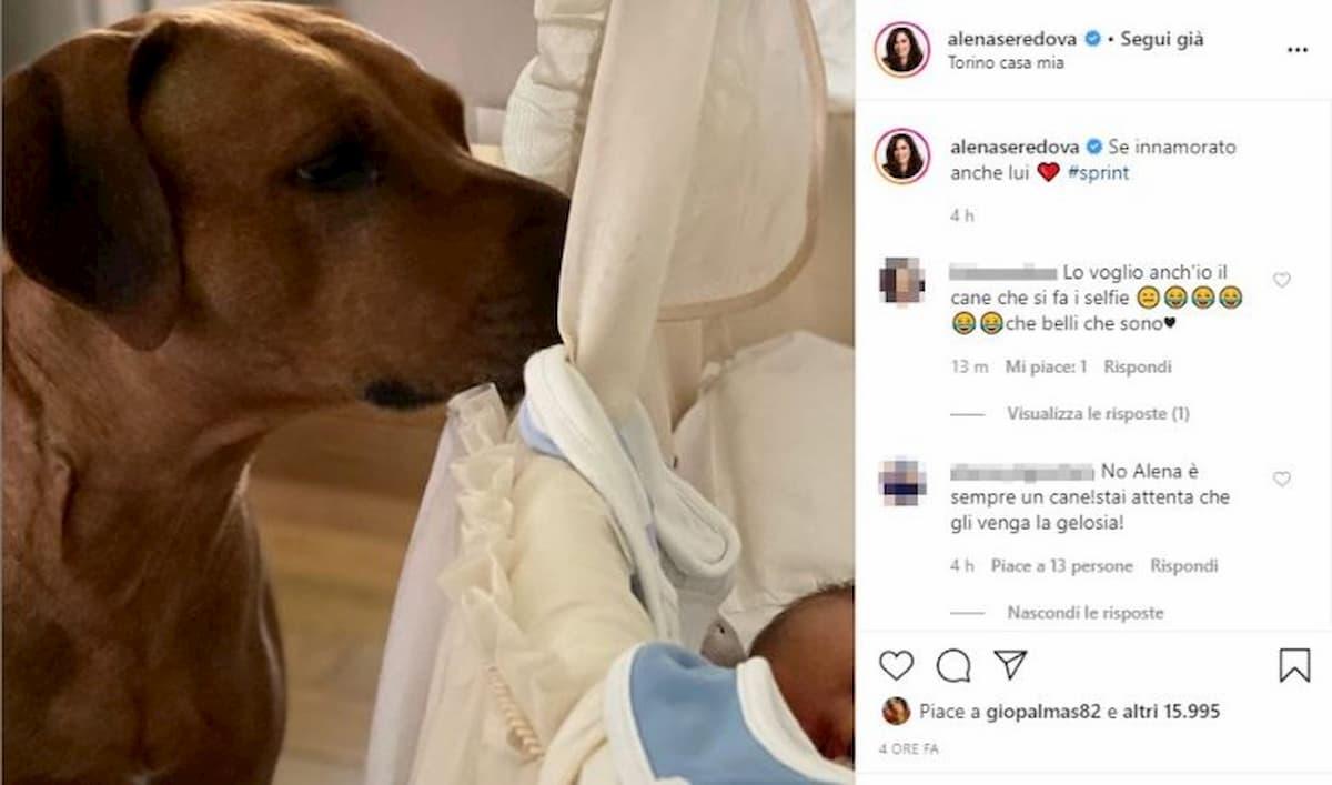 """Alena Seredova criticata per la foto del cane che veglia sulla figlia in culla: """"Pericoloso e non igienico"""""""