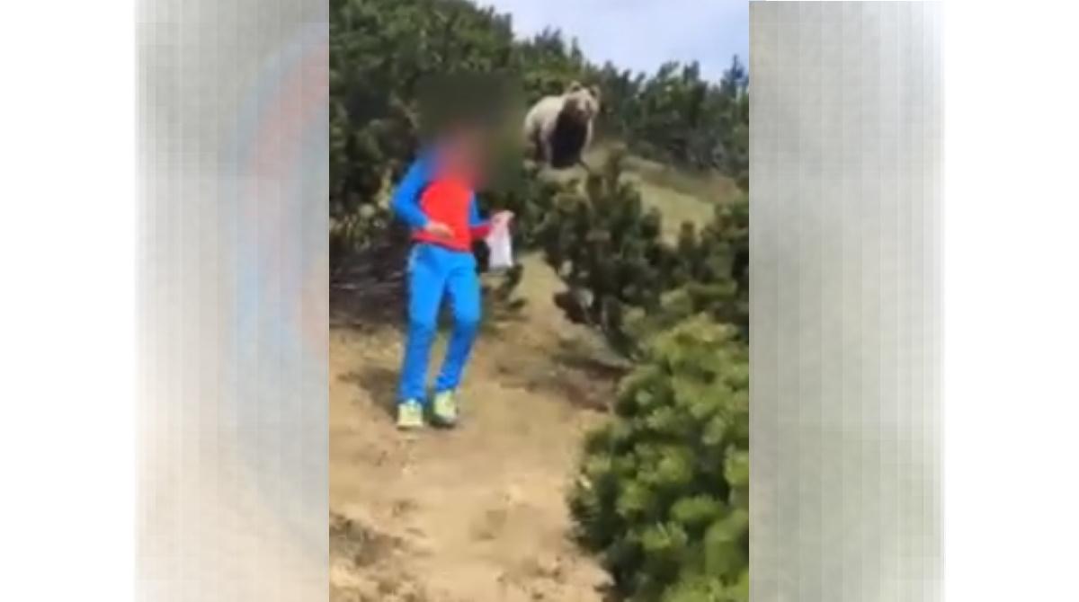 Orso-bambino, incontro ravvicinato il Trentino: la scena surreale VIDEO