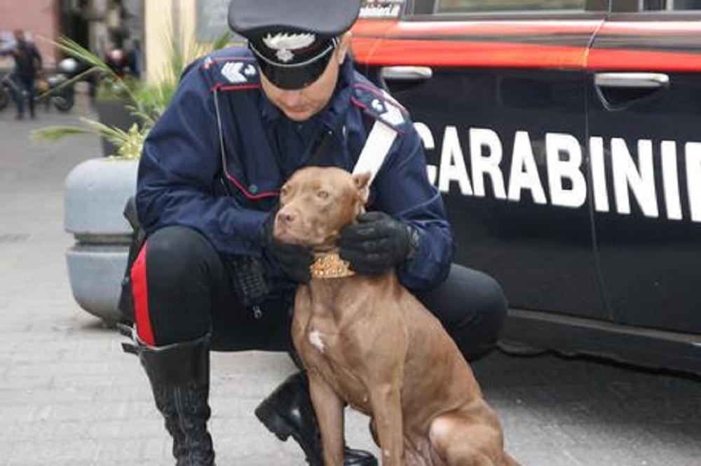 """Cani militari in """"pensione"""" potranno essere tenuti dai loro soldati addestratori"""