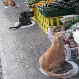 gatti nel cerchio filippine