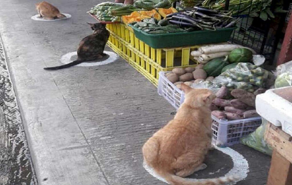 i gatti nel cerchio nelle filippine