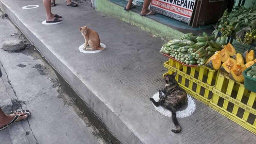I gatti nel cerchio nel mercato delle filippine