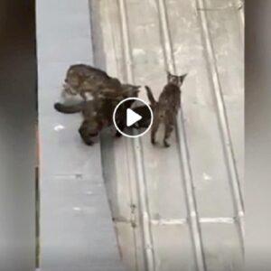 gatto mamma