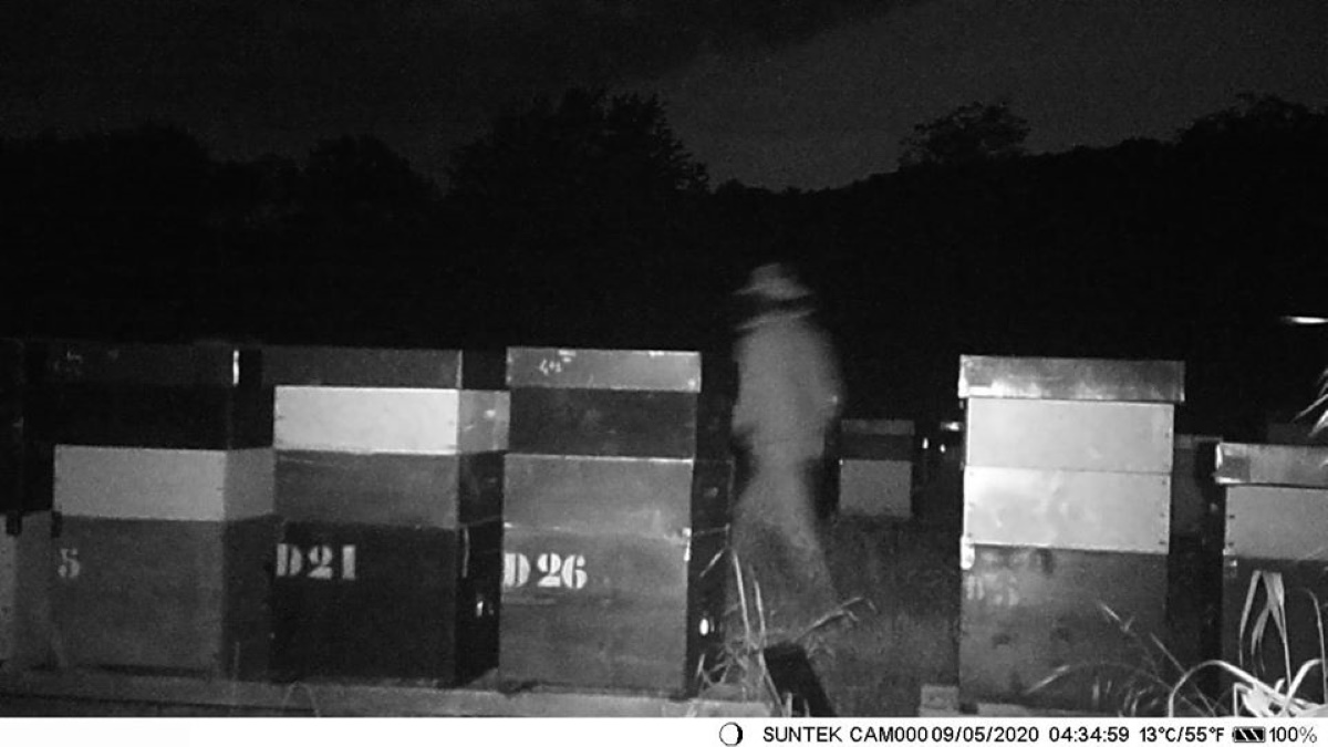 Furto miele a Perosa Canavese: ladro fotografato dalle telecamere