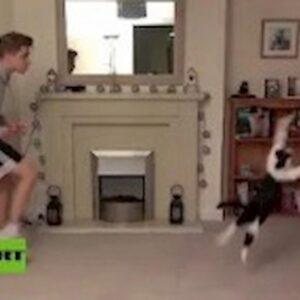 'Meownel Neuer', il gatto paratutto come il portiere del Bayern VIDEO