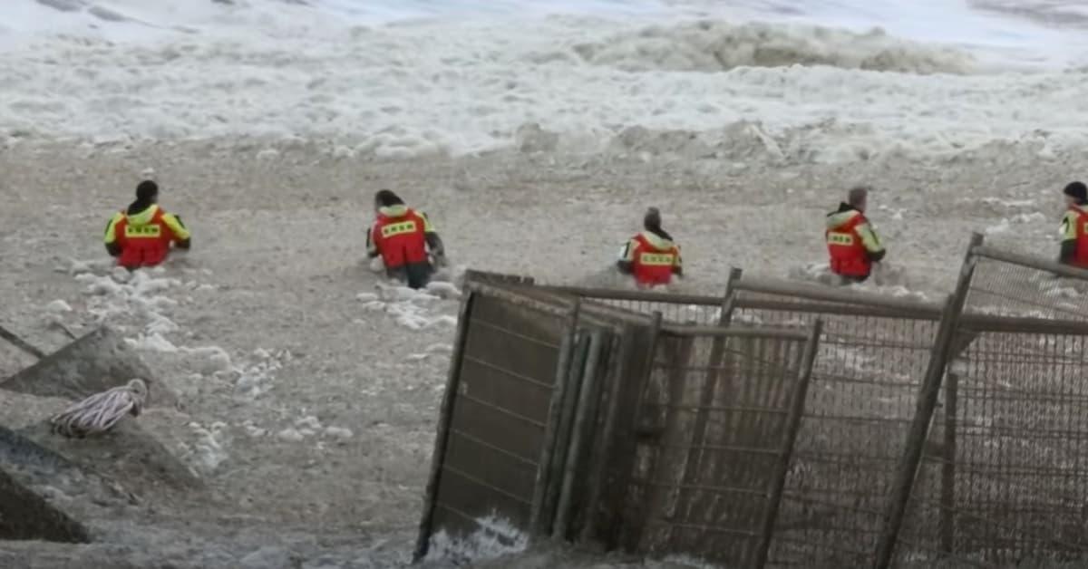 Olanda, cinque surfisti travolti e uccisi in mare da una 'valanga' di schiuma