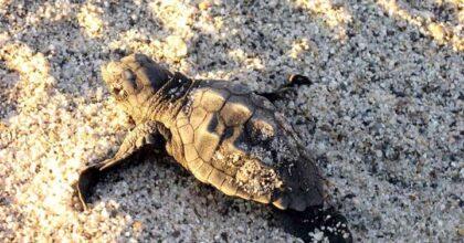 Repubblica Dominicana, neonata muore dopo aver ingerito sangue di tartaruga: doveva proteggerla dal Coronavirus