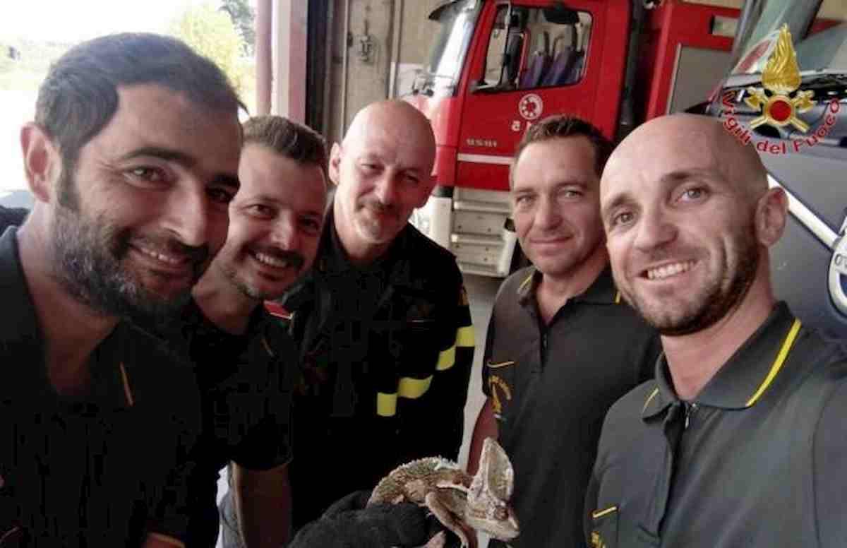 """Lavoria, vigili del fuoco chiamati sulla FiPiLi: """"Ho un camaleonte sul paraurti"""""""