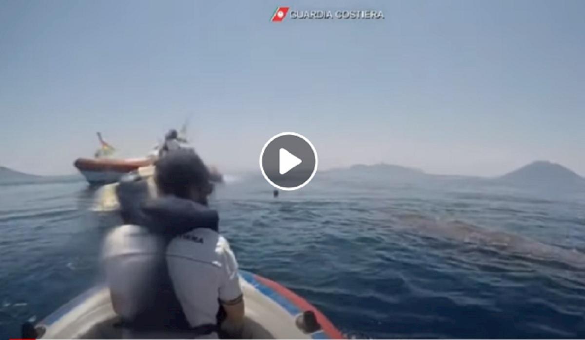 capodoglio intrappolato nella rete da pesca