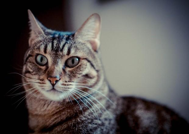 Un gatto nella foto Ansa