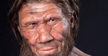 Neanderthal, Ansa