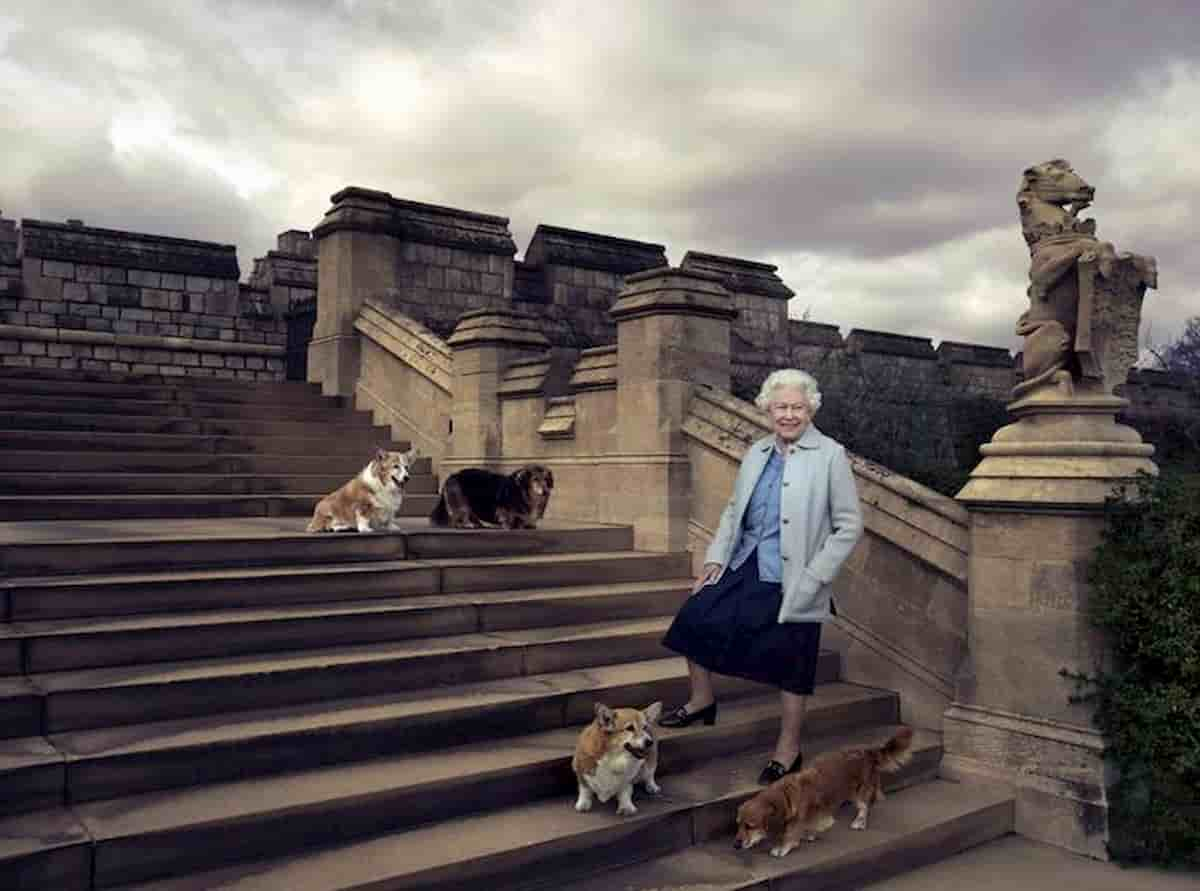 """Elisabetta e i corgi, l'ex chef della Regina rivela: """"Dovevo cucinare anche per loro"""""""