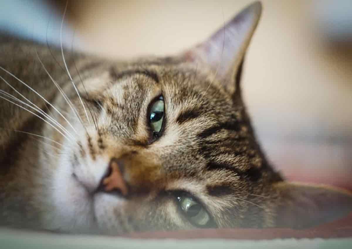 Torino, una foto d'archivio Ansa di un gatto