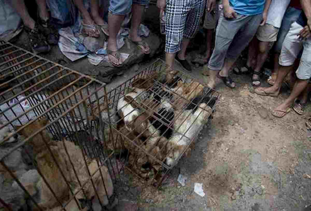 Cina, al via Festival della carne di cane a Yulin. Ma non era vietato?