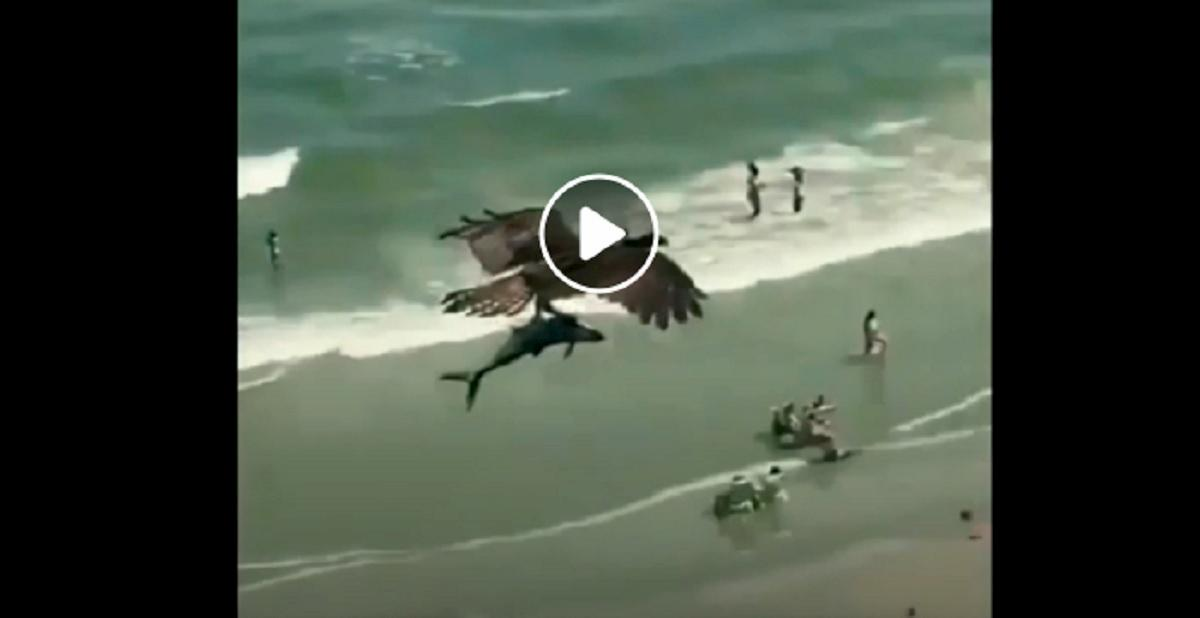aquila sorvola la spiaggia