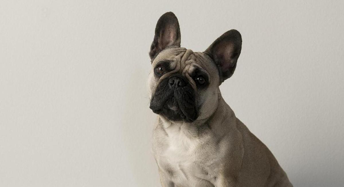 Pisa, lasciano il cane in auto sotto il sole: è morto. Denunciata coppia di turisti danesi
