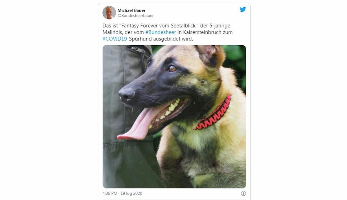Coronavirus, cani fiutano positivi