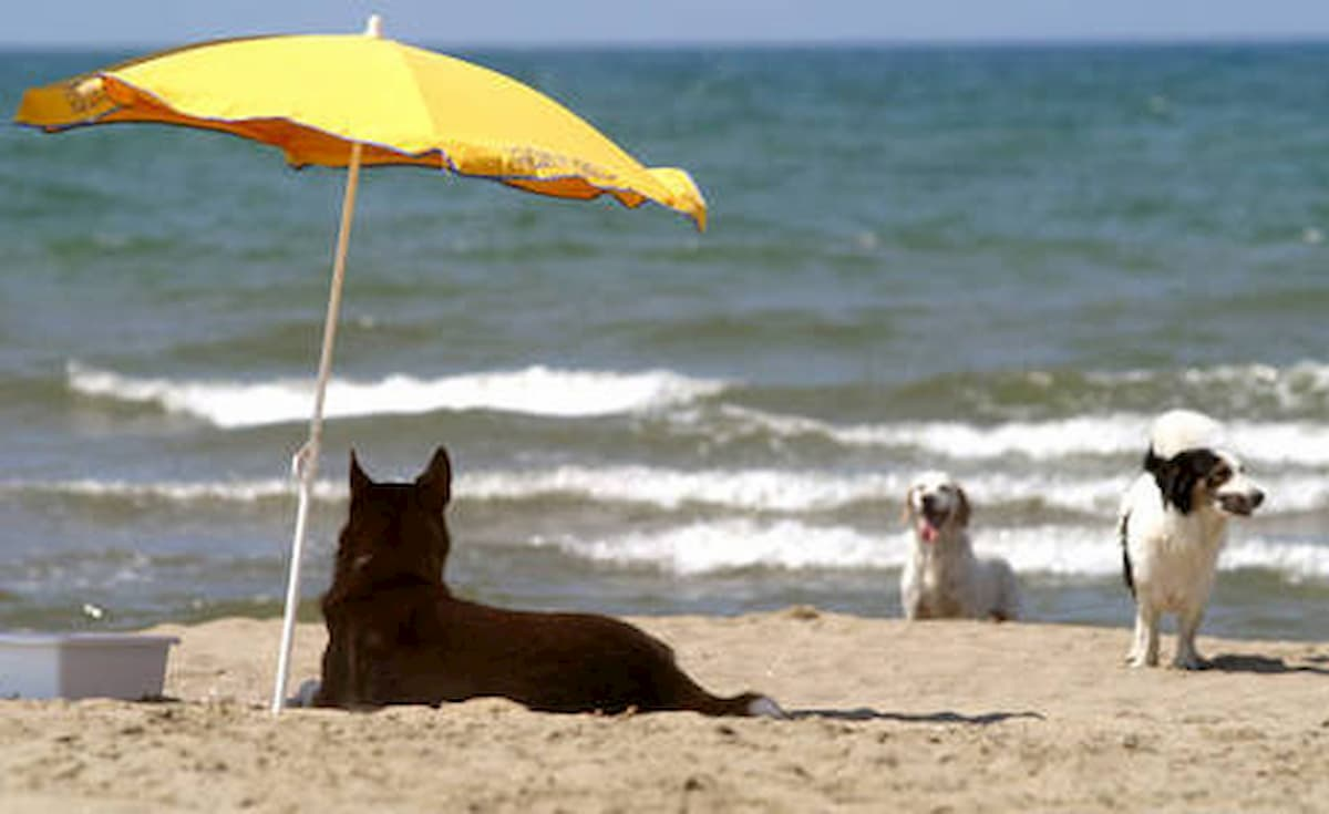 Cani e gatti in estate: i consigli della Aidaa (Associazione italiana per la difesa degli animali)