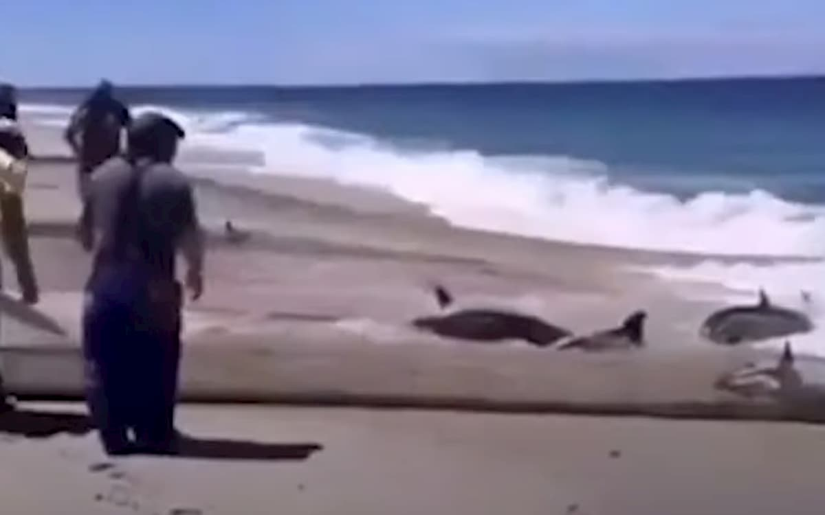 Portogallo, reti di pescatori trascinano a riva delfini