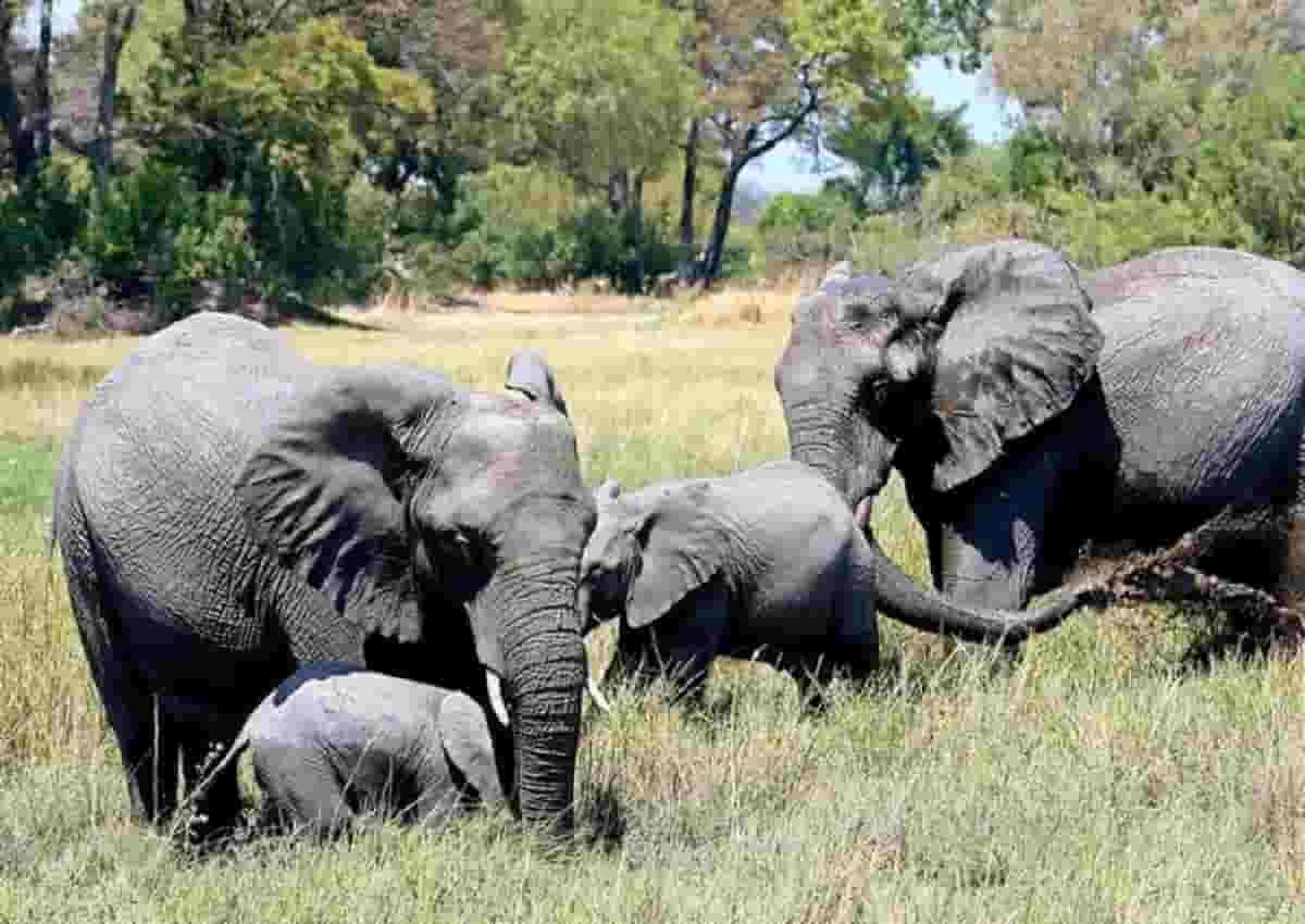 Botswana, foto Ansa di alcuni elefanti