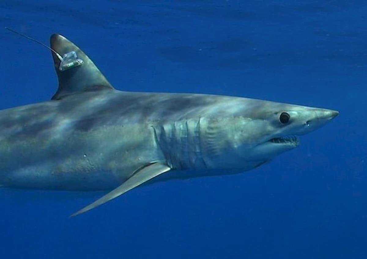 Florida, 30enne attaccato da uno squalo. Salvato dalla moglie incinta. Foto d'archivio Ansa
