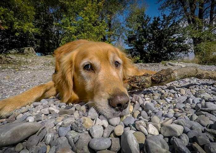 cane foto ansa