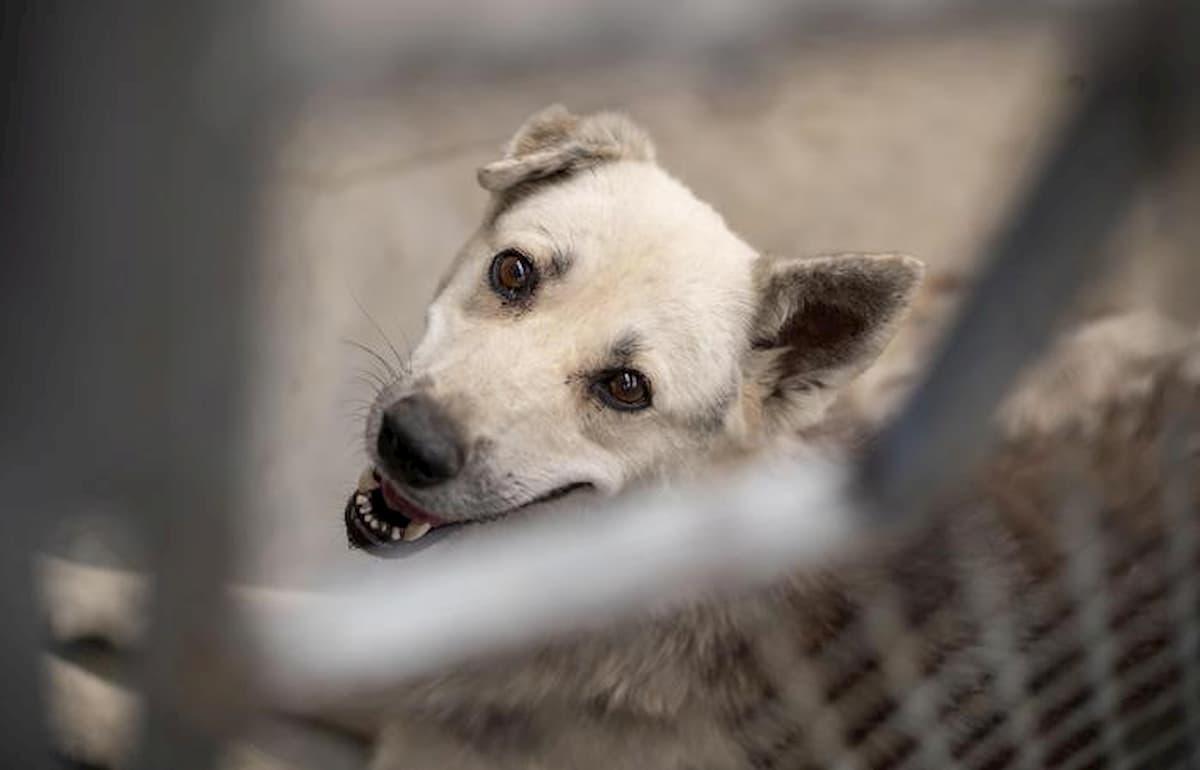 Cane sul balcone abbandonato a Caltanissetta