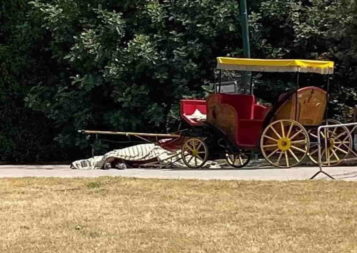 Caserta, la foto del cavallo morto pubblicata su Facebook