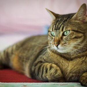 Trento, gatto ucciso dal vicino: lo ha annegato perché ha fatto i bisogni casa sua
