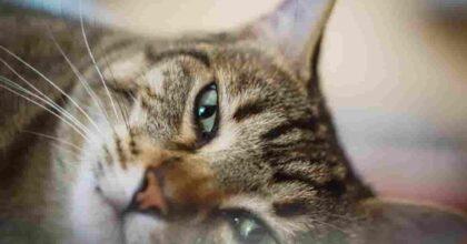 Inghilterra, foto Ansa di un gatto