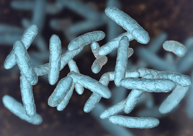 microbioti foto ansa