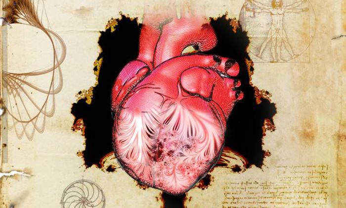 Le trabecole del cuore, risolto il mistero