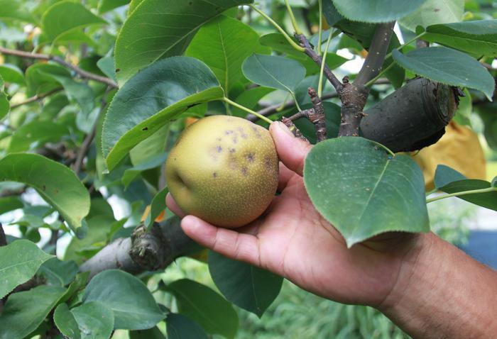 Amazon, semi e piante dall'estero, stop recapito in Usa
