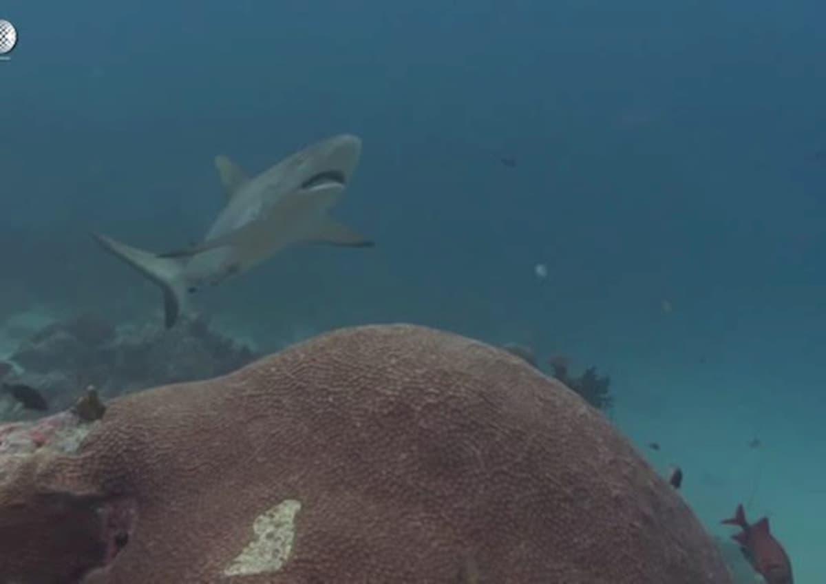 Attaccata da uno squalo al Lido di Venezia