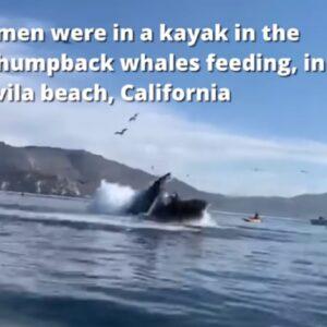 Balena inghiotte ragazze sul kayak e poi le sputa, come nel Libro di Giona VIDEO