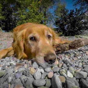 Bussolengo: il cane ha la dissenteria, il padrone lo porta fuori durante il coprifuoco e viene multato
