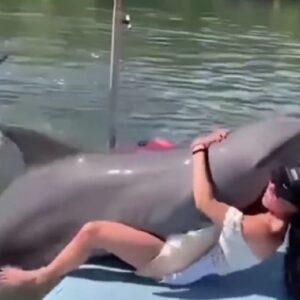 Delfino troppo curioso salta addosso e si sdraia tra le gambe della vlogger Pripri Rose VIDEO