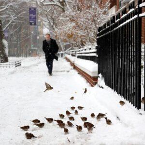 bene a New York, foto Ansa