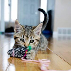 Gattino rimane solo in casa