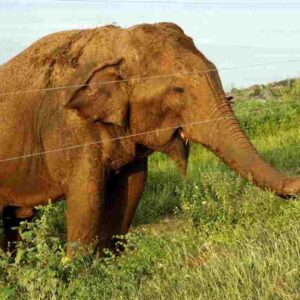 elefnate uccide guardiano zoo