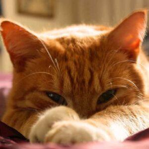 Festa del gatto oggi mercoledì 17 febbraio, perché si festeggia proprio oggi il mondo dei felini