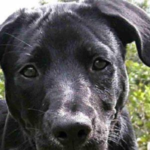 Torino, padrona porta a spasso il cane senza i documenti e... viene multata