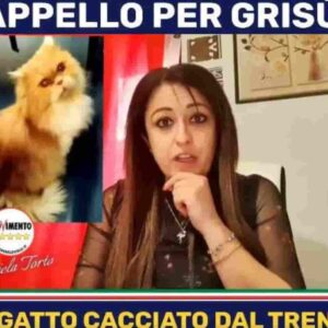Il gatto Grisù in Parlamento grazie a Daniela Torto (M5s): cacciato dal treno, scomparso, ora ritrovato