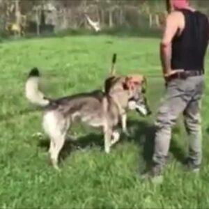 Calci al cane addestratore