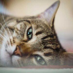 Covid uomo gatto
