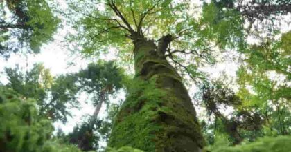 Foreste Casentinesi, Parco Nazionale Arcipelago Toscano e Parco del Gran Paradiso nella green list dei parchi mondiali