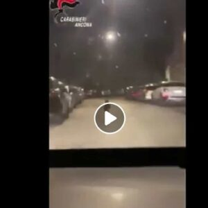 Lupo ad Ancona: i carabinieri lo trovano in via Giannelli e lo scortano fuori dalla città VIDEO