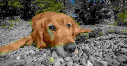 Orrore ad Ekaterinburg (Russia), molotov contro rifugio per animali domestici: sterminati 30 cani