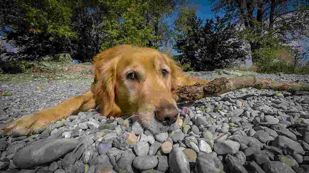 un cane, foto ansa