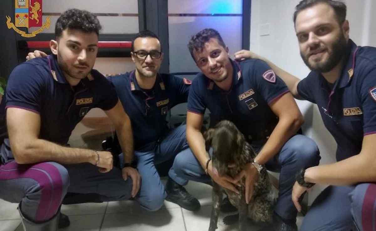 Poggibonsi, cane scivola nel fiume Elsa: il salvataggio dei poliziotti nel buio della notte VIDEO